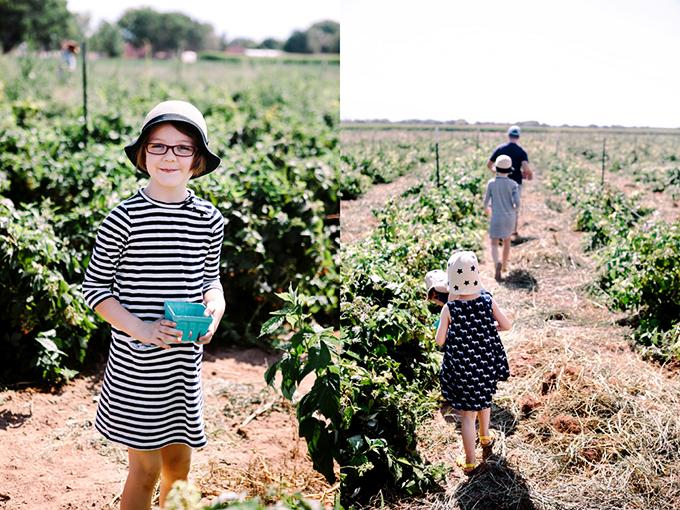 Raspberry Farm 2013