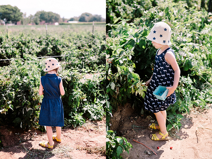 Heidi's Raspberry Farm | Los Lunas, New Mexico