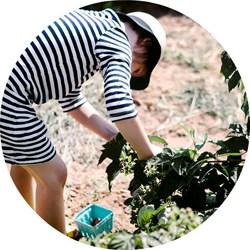 heidi's raspberries-2499 blog