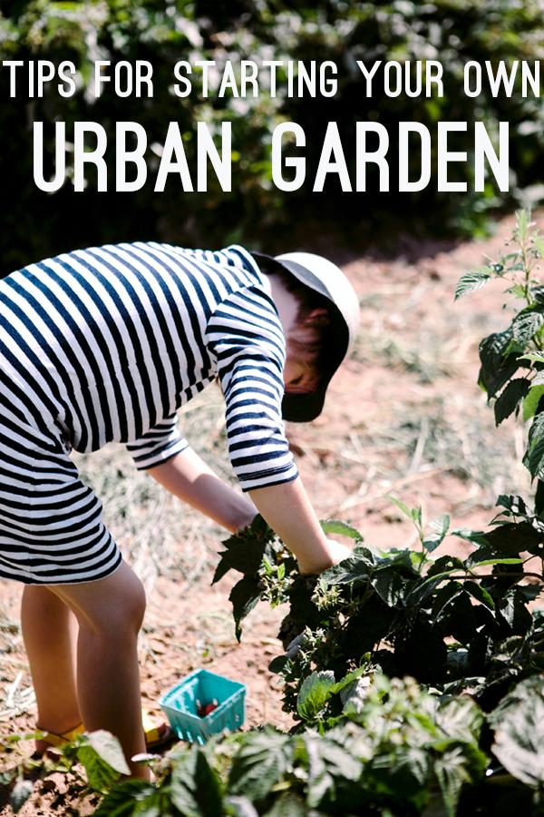 Tips for Starting Your Own Urban Garden