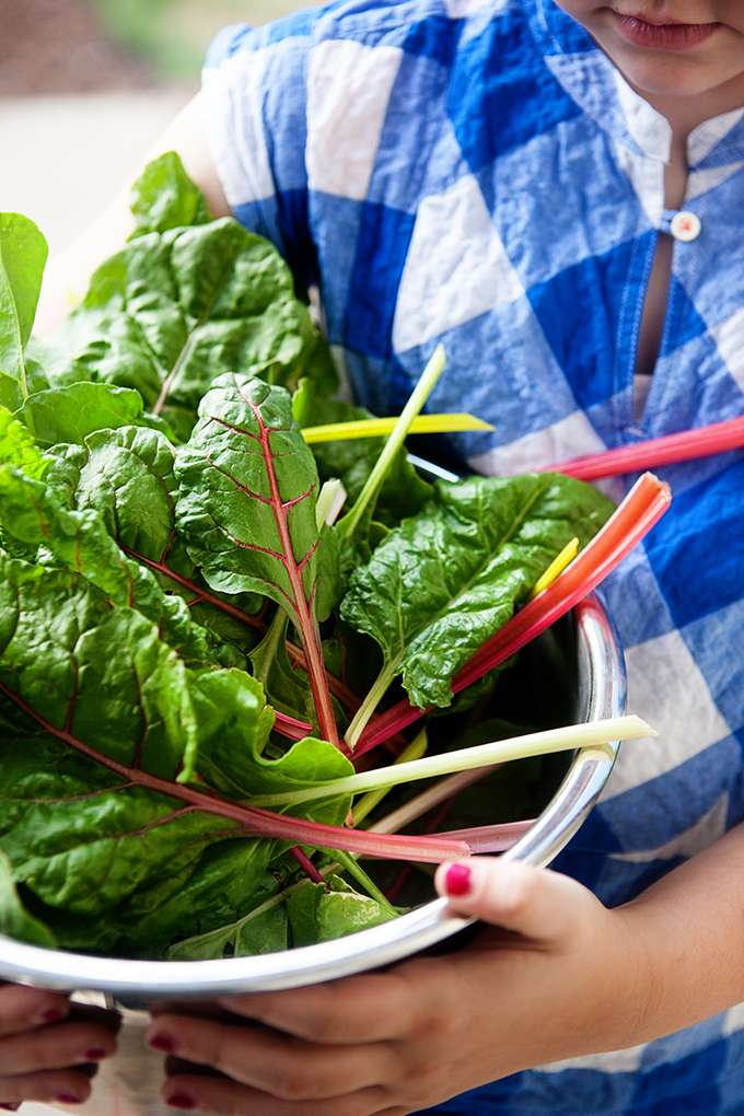 Recipes from the Garden: Sharing our favorite recipes using ingredients fresh from the garden. Chard, Spinach, and Mixed Lettuce Greens.