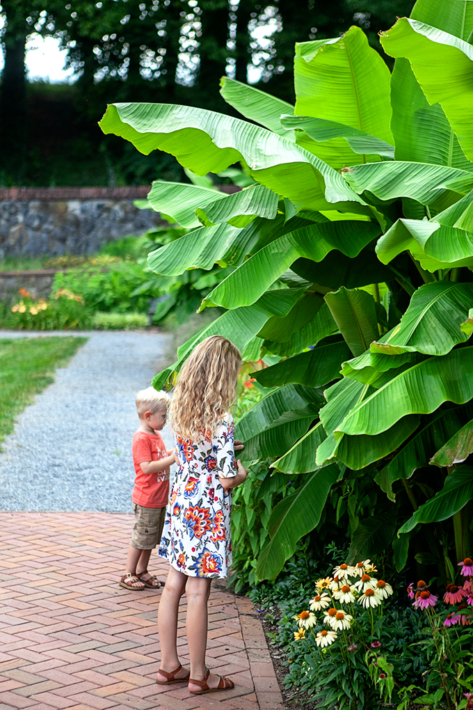 Two Kids standing under plant with giant green leaves at Biltmore Gardens