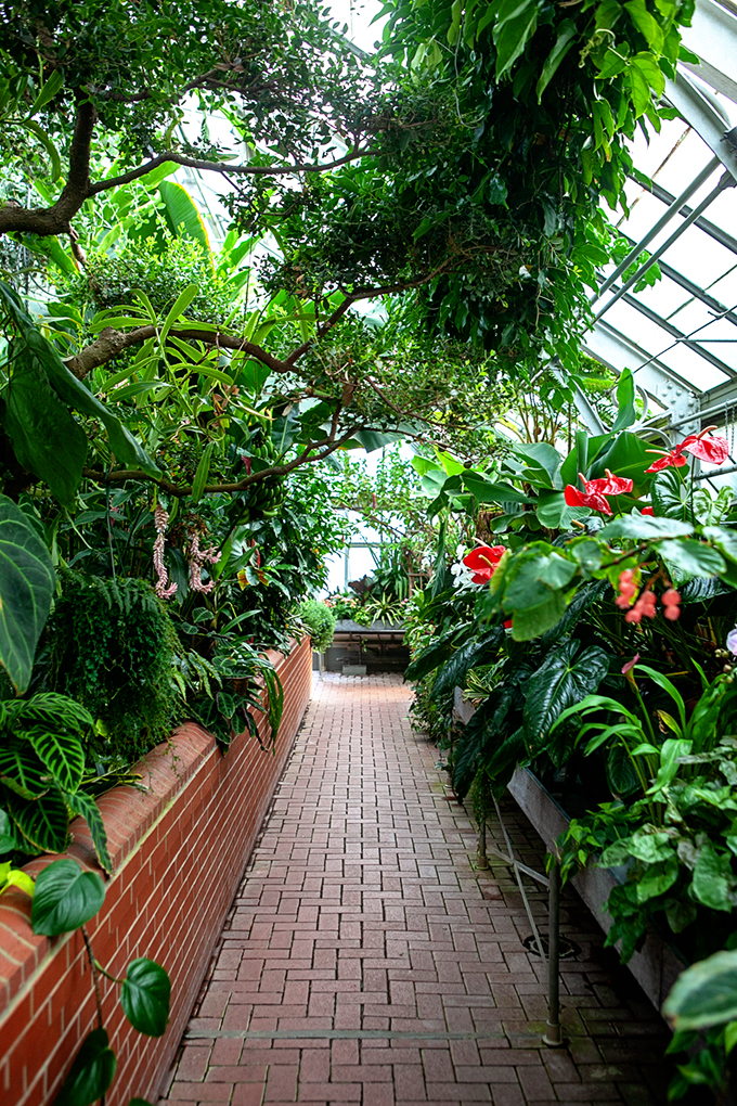 Biltmore Gardens Inside Conservatory