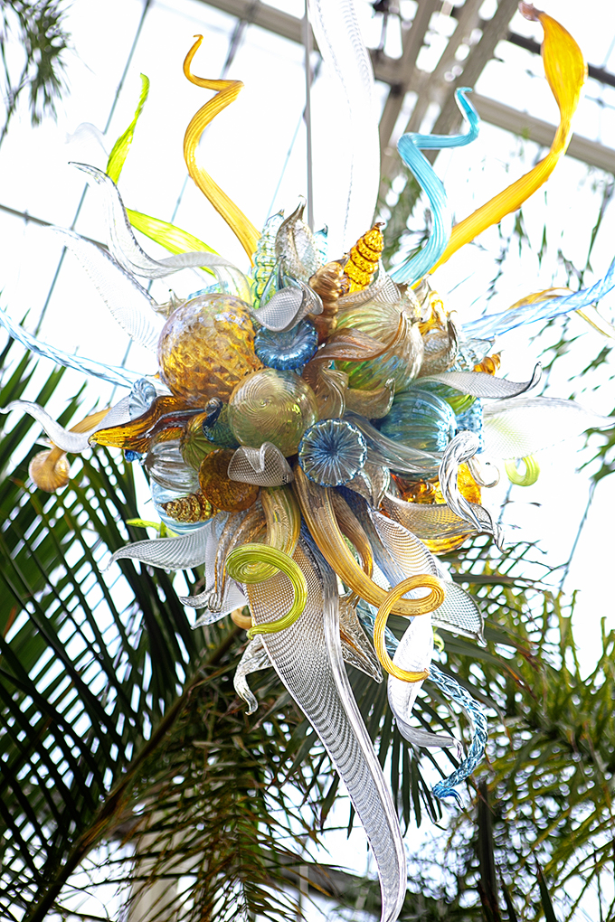 Hanging Blown Glass Sculpture by Chihuly at the Biltmore Gardens Conservatory