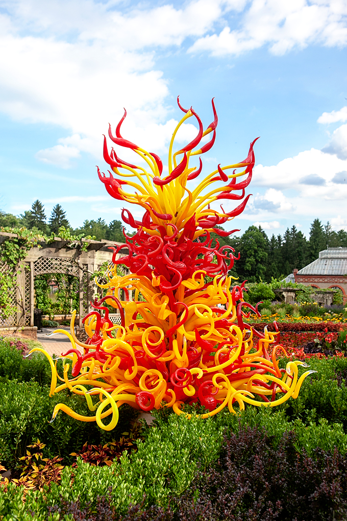 Large Red and Yellow Glass Blown Sculpture by Chihuly in the Biltmore Gardens