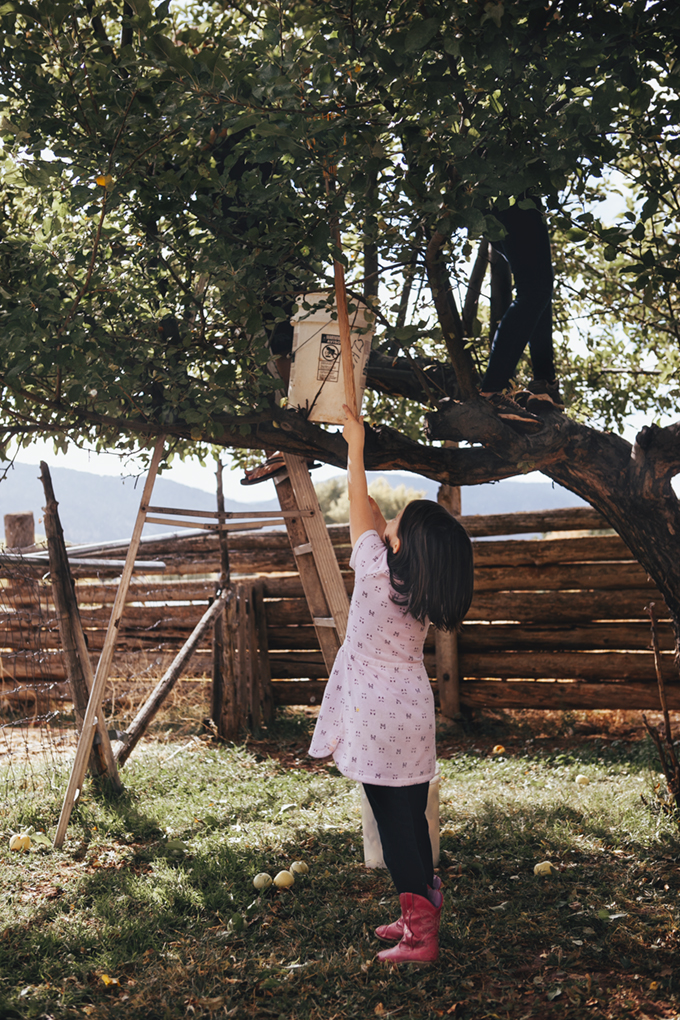 kids picking apples from an apple tree and our favorite apple recipes
