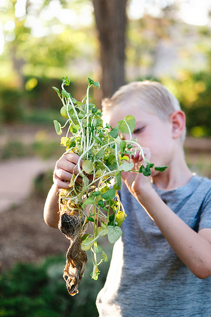 boy holding a bunch of watercress with roots